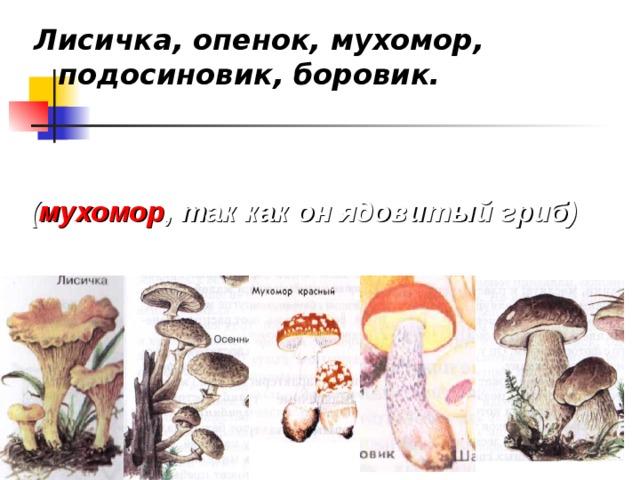 Лисичка, опенок, мухомор, подосиновик, боровик.  ( мухомор , так как он ядовитый гриб)
