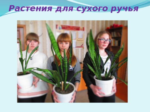 Растения для сухого ручья