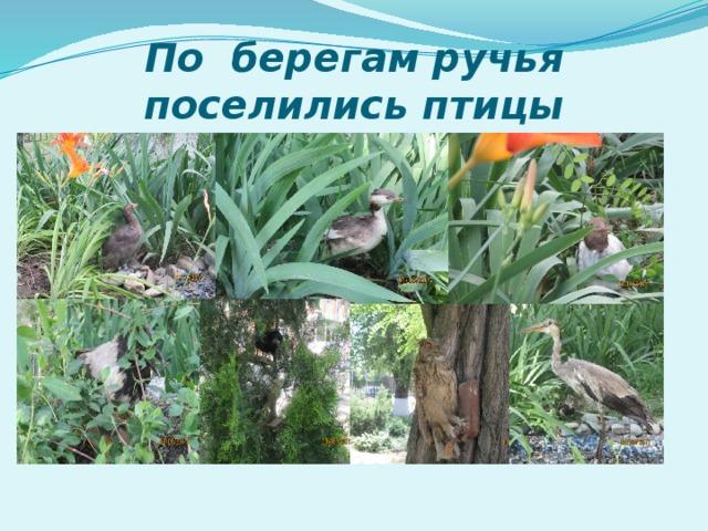 По берегам ручья поселились птицы