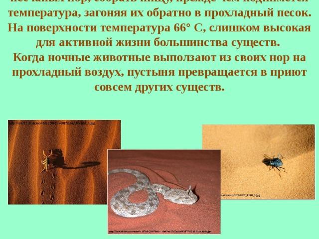 В начале дня ящерицы и жуки вылезают из своих песчаных нор, собрать пищу, прежде чем поднимется температура, загоняя их обратно в прохладный песок. На поверхности температура 66° С, слишком высокая для активной жизни большинства существ. Когда ночные животные выползают из своих нор на прохладный воздух, пустыня превращается в приют совсем других существ.