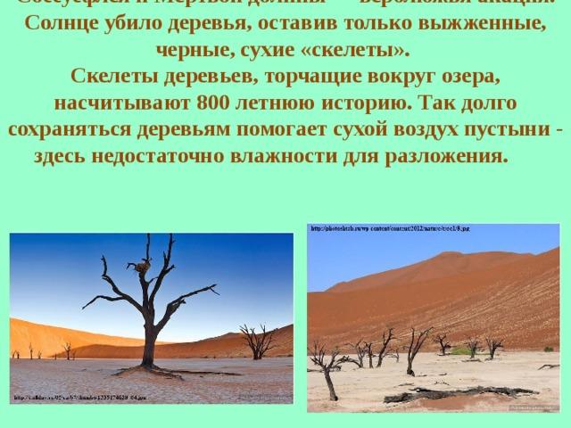 Основная растительность Соссусфлея и Мертвой долины — верблюжья акация. Солнце убило деревья, оставив только выжженные, черные, сухие «скелеты». Скелеты деревьев, торчащие вокруг озера, насчитывают 800 летнюю историю. Так долго сохраняться деревьям помогает сухой воздух пустыни - здесь недостаточно влажности для разложения.