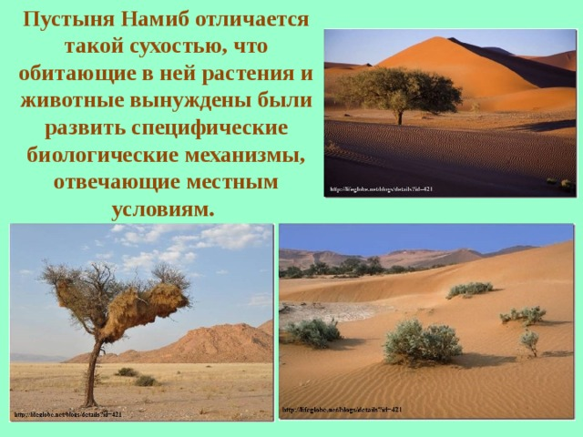 Пустыня Намиб отличается такой сухостью, что обитающие в ней растения и животные вынуждены были развить специфические биологические механизмы, отвечающие местным условиям.
