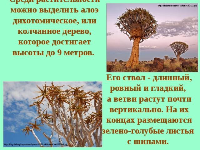 Среди растительности можно выделить алоэ дихотомическое, или колчанное дерево, которое достигает высоты до 9 метров. Его ствол - длинный, ровный и гладкий, а ветви растут почти вертикально. На их концах размещаются зелено-голубые листья с шипами.