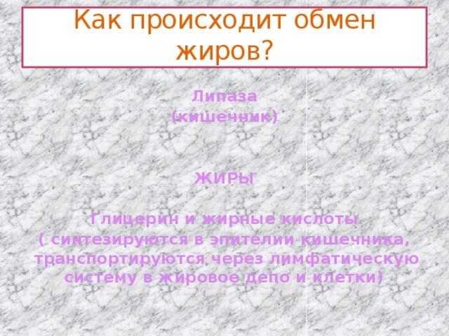 Как происходит обмен жиров?  Липаза (кишечник)   ЖИРЫ  Глицерин и жирные кислоты ( синтезируются в эпителии кишечника, транспортируются через лимфатическую систему в жировое депо и клетки)