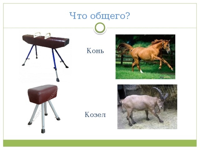 Что общего? Конь Козел