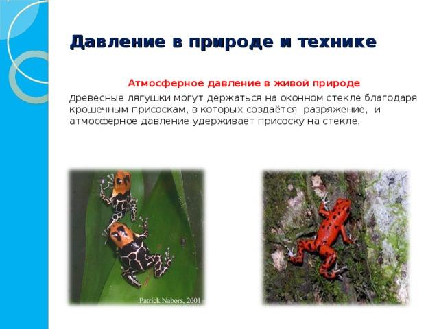 Давление в природе и технике  Атмосферное давление в живой природе   Д ревесные лягушки могут держаться на оконном стекле благодаря крошечным присоскам, в которых создаётся разряжение, и атмосферное давление удерживает присоску на стекле.
