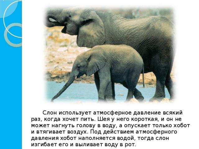 Слон использует атмосферное давление всякий раз, когда хочет пить. Шея у него короткая, и он не может нагнуть голову в воду, а опускает только хобот и втягивает воздух. Под действием атмосферного давления хобот наполняется водой, тогда слон изгибает его и выливает воду в рот.