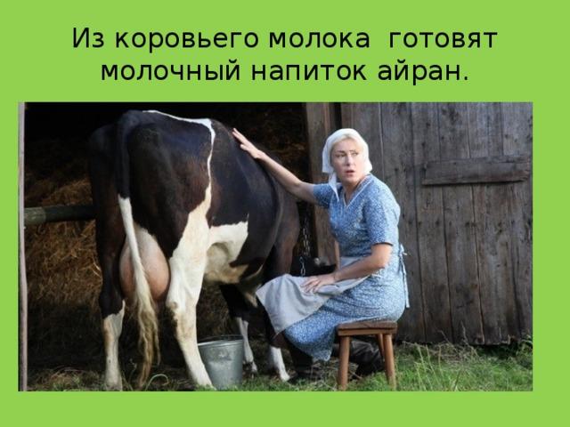Из коровьего молока готовят молочный напиток айран.