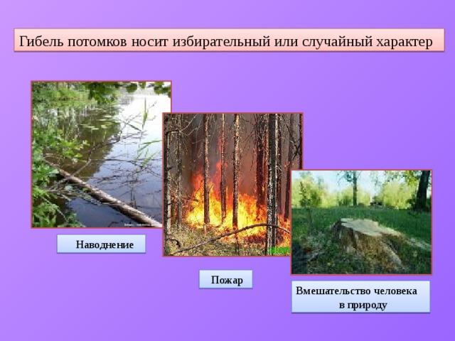 Гибель потомков носит избирательный или случайный характер  Наводнение  Пожар Вмешательство человека  в природу