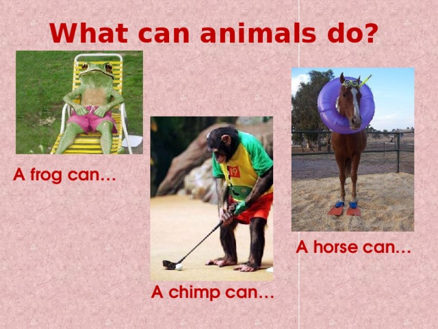 What can animals do? A frog can… A horse can… A chimp can…