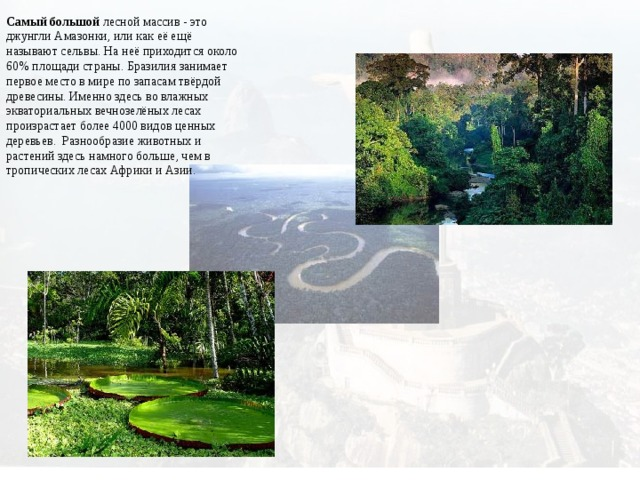 Самый большой лесной массив - это джунгли Амазонки, или как её ещё называют сельвы. На неё приходится около 60% площади страны. Бразилия занимает первое место в мире по запасам твёрдой древесины.Именно здесь во влажных экваториальных вечнозелёных лесах произрастает более 4000 видов ценных деревьев. Разнообразие животных и растений здесь намного больше, чем в тропических лесах Африки и Азии.