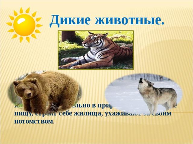 Дикие животные.  Живут самостоятельно в природе: добывают себе пищу, строят себе жилища, ухаживают за своим потомством .