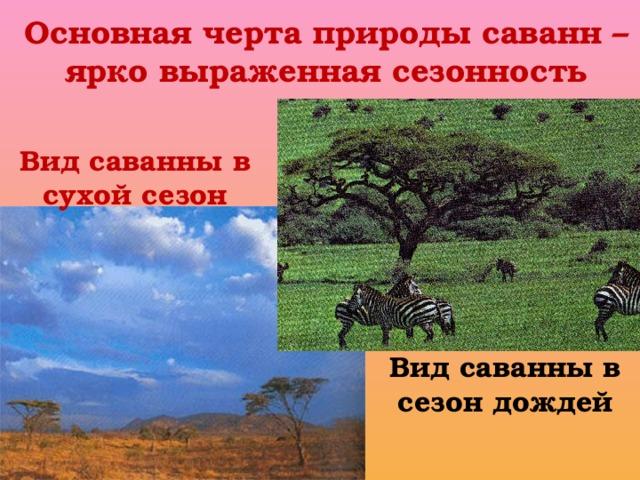 Основная черта природы саванн – ярко выраженная сезонность Вид саванны в сухой сезон Вид саванны в сезон дождей