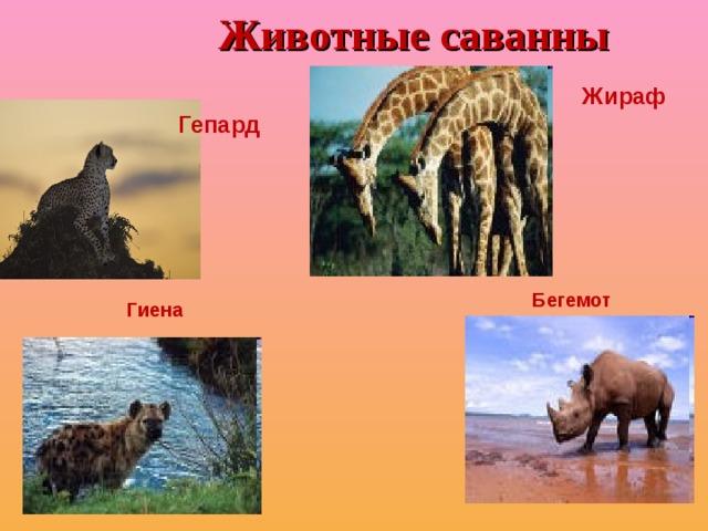 Животные саванны   Жираф Гепард Бегемот Гиена
