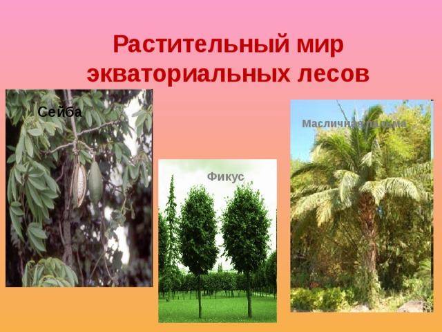 Растительный мир экваториальных лесов Сейба Масличная пальма  Фикус