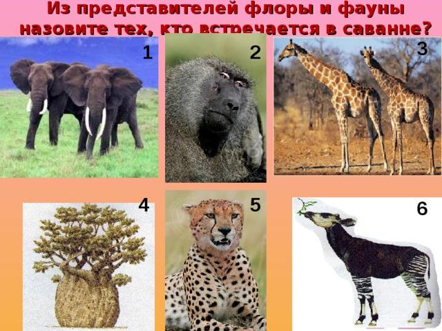Из представителей флоры и фауны назовите тех, кто встречается в саванне? 3 1 2 4 5 6