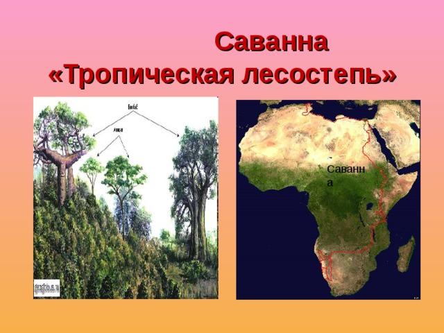 Саванна «Тропическая лесостепь» Саванна Саванна