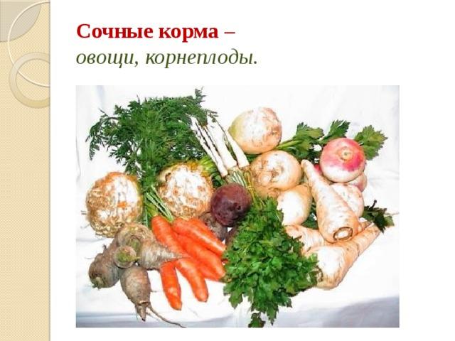 Сочные корма –  овощи, корнеплоды.