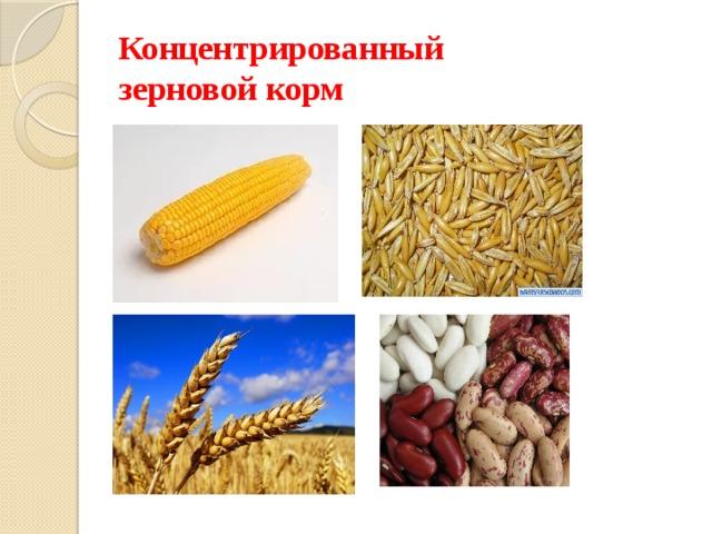 Концентрированный  зерновой корм