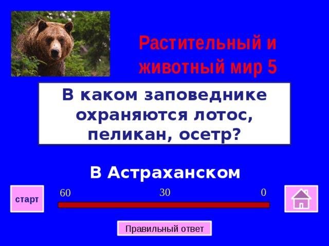Растительный и животный мир 5 В каком заповеднике охраняются лотос, пеликан, осетр? В Астраханском 0 30 60 старт Правильный ответ