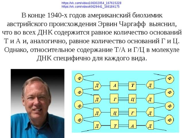 https://vk.com/video106302054_167615228  В конце 1940-х годов американский биохимик австрийского происхождения Эрвин Чаргафф выяснил, что во всех ДНК содержится равное количество оснований Т и А и, аналогично, равное количество оснований Г и Ц. Однако, относительное содержание Т/А и Г/Ц в молекуле ДНК специфично для каждого вида. https://vk.com/video40629441_166184175