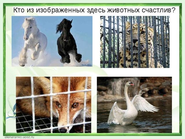 Кто из изображенных здесь животных счастлив?