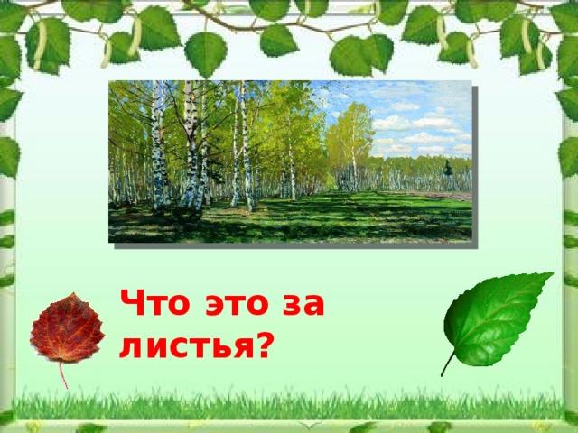 Что это за листья?