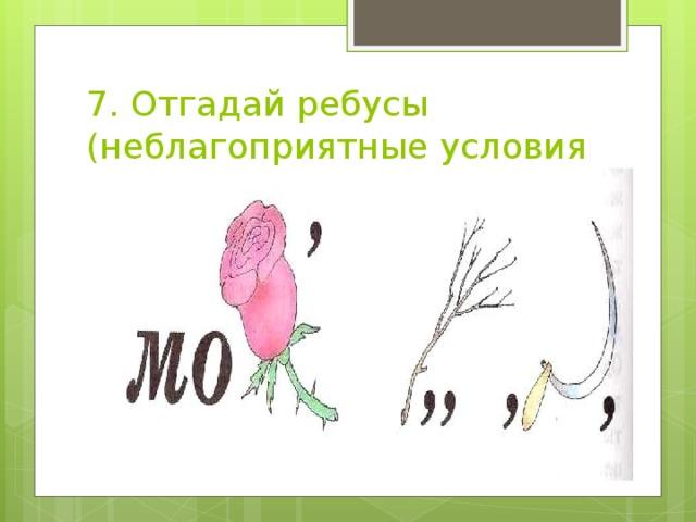 7. Отгадай ребусы (неблагоприятные условия на природе)