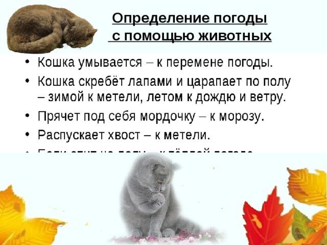 Определение погоды  с помощью животных