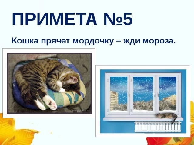 ПРИМЕТА №5 Кошка прячет мордочку – жди мороза.
