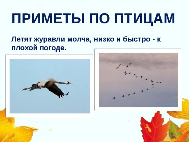 ПРИМЕТЫ ПО ПТИЦАМ Летят журавли молча, низко и быстро - к плохой погоде .