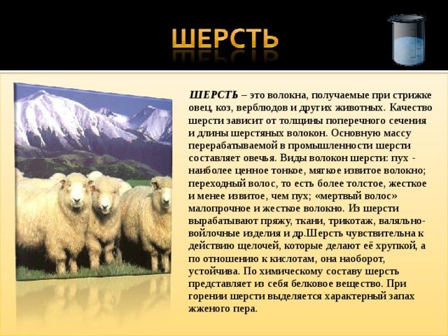 ШЕРСТЬ – это волокна, получаемые при стрижке овец, коз, верблюдов и других животных. Качество шерсти зависит от толщины поперечного сечения и длины шерстяных волокон. Основную массу перерабатываемой в промышленности шерсти составляет овечья. Виды волокон шерсти: пух - наиболее ценное тонкое, мягкое извитое волокно; переходный волос, то есть более толстое, жесткое и менее извитое, чем пух; «мертвый волос» малопрочное и жесткое волокно. Из шерсти вырабатывают пряжу, ткани, трикотаж, валяльно-войлочные изделия и др.Шерсть чувствительна к действию щелочей, которые делают её хрупкой, а по отношению к кислотам, она наоборот, устойчива. По химическому составу шерсть представляет из себя белковое вещество. При горении шерсти выделяется характерный запах жженого пера.
