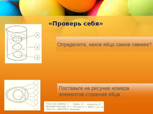 «Проверь себя» Определите, какое яйцо самое свежее? Поставьте на рисунке номера элементов строения яйца