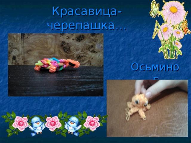 Красавица-черепашка… Осьминог