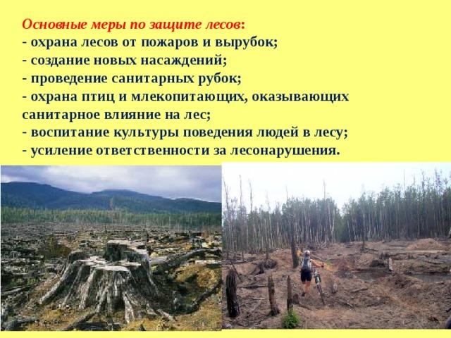 Основные меры по защите лесов : - охрана лесов от пожаров и вырубок; - создание новых насаждений; - проведение санитарных рубок; - охрана птиц и млекопитающих, оказывающих санитарное влияние на лес; - воспитание культуры поведения людей в лесу; - усиление ответственности за лесонарушения.