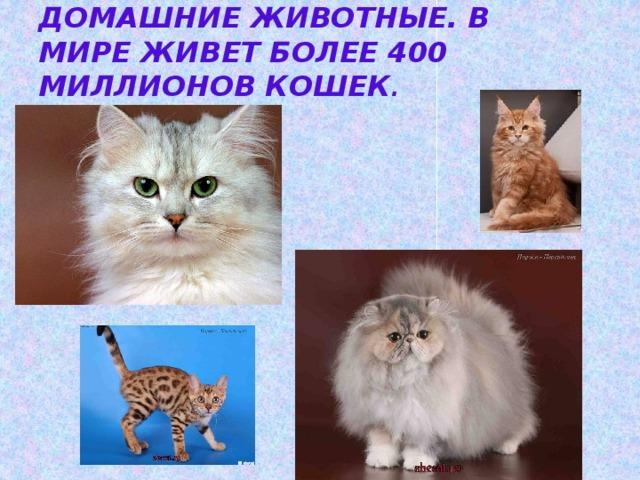 Кошки – самые распространённые домашние животные. В мире живет более 400 миллионов кошек .