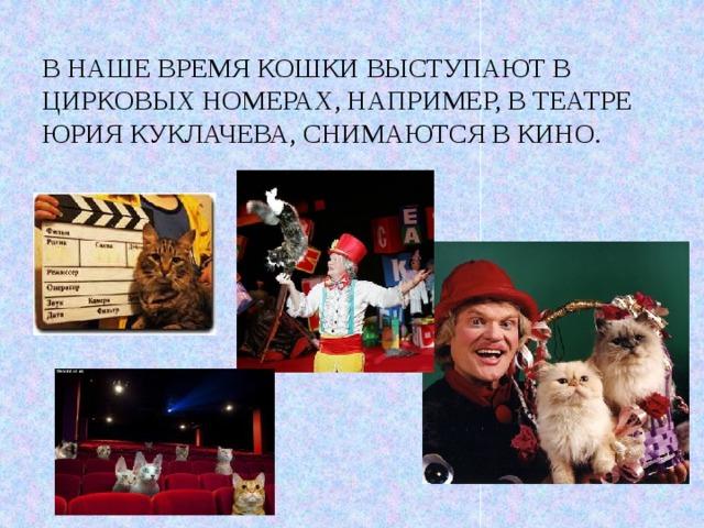 В наше время кошки выступают в цирковых номерах, например, в театре Юрия Куклачева, снимаются в кино.
