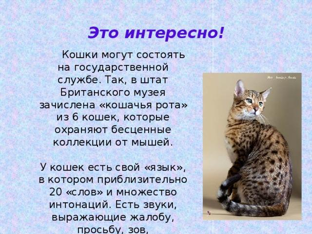 Это интересно!  Кошки могут состоять на государственной службе. Так, в штат Британского музея зачислена «кошачья рота» из 6 кошек, которые охраняют бесценные коллекции от мышей. У кошек есть свой «язык», в котором приблизительно 20 «слов» и множество интонаций. Есть звуки, выражающие жалобу, просьбу, зов, удовольствие, гнев, вопрос.