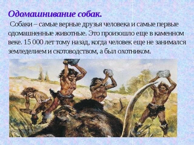 Одомашнивание собак.   Собаки – самые верные друзья человека и самые первые одомашненные животные. Это произошло еще в каменном веке. 15000 лет тому назад, когда человек еще не занимался земледелием и скотоводством, а был охотником.