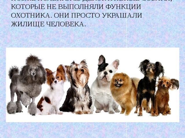 Позже появились декоративные собаки, которые не выполняли функции охотника. Они просто украшали жилище человека.