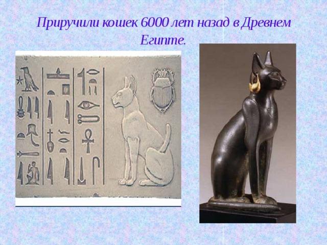Приручили кошек 6000 лет назад в Древнем Египте.
