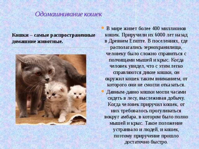 Одомашнивание кошек В мире живет более 400 миллионов кошек. Приручили их 6000 лет назад в Древнем Египте. В поселениях, где располагались зернохранилища, человеку было сложно справиться с полчищами мышей и крыс. Когда человек увидел, что с этим легко справляются дикие кошки, он окружил кошек таким вниманием, от которого они не смогли отказаться. Давным-давно кошки могли часами сидеть в лесу, выслеживая добычу. Когда человек приручил кошек, от них требовалось прогуливаться вокруг амбара, в котором было полно мышей и крыс. Такое положение устраивало и людей, и кошек, поэтому приручение прошло достаточно быстро. Кошки – самые распространенные домашние животные.