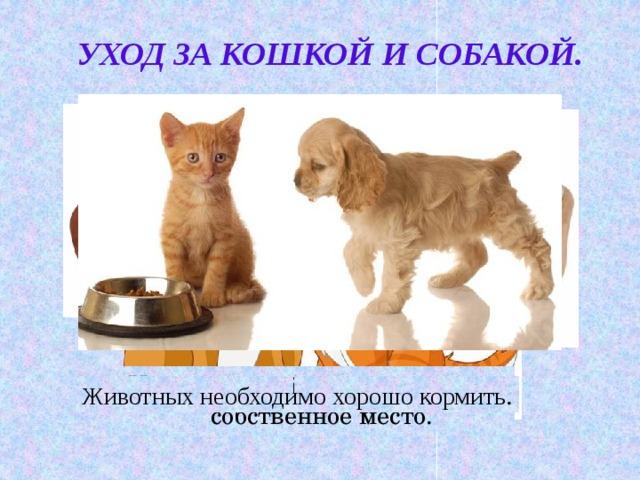 Уход за кошкой и собакой. У кошки и собаки должно быть  собственное место. Животных необходимо хорошо кормить .