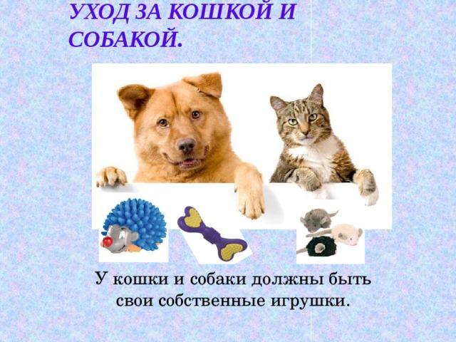 Уход за кошкой и собакой. У кошки и собаки должны быть свои собственные игрушки.
