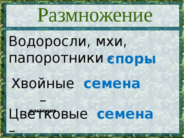 Размножение Водоросли, мхи, папоротники - споры Хвойные – растения семена Цветковые – растения семена 06.11.17