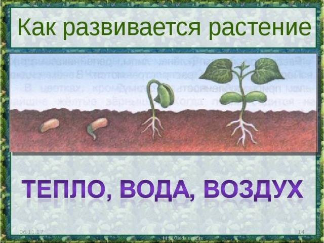 Как развивается растение 06.11.17