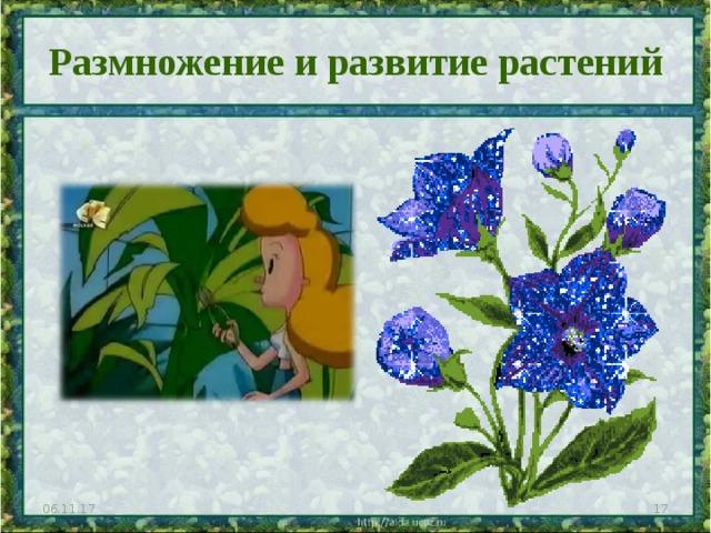 Размножение и развитие растений 06.11.17