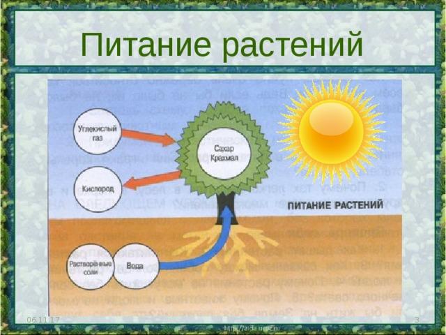 Питание растений 06.11.17