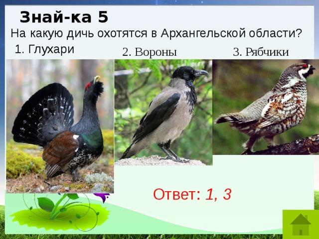 Знай-ка 5 На какую дичь охотятся в Архангельской области? 1. Глухари 2. Вороны 3. Рябчики Ответ: 1, 3