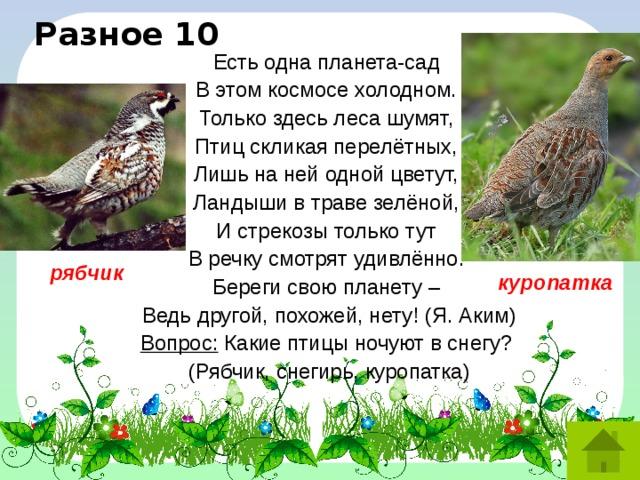 Разное 10 Есть одна планета-сад  В этом космосе холодном.  Только здесь леса шумят,  Птиц скликая перелётных,  Лишь на ней одной цветут,  Ландыши в траве зелёной,  И стрекозы только тут  В речку смотрят удивлённо.  Береги свою планету –  Ведь другой, похожей, нету! (Я. Аким) Вопрос: Какие птицы ночуют в снегу? (Рябчик, снегирь, куропатка) рябчик куропатка